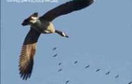 معرفی الگوریتم جامعه پرندگان PSO