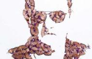 عکس: هنرنمایی با تراشه های مداد