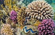 تصاویری شگفتانگیز از غولهای اعماق دریا